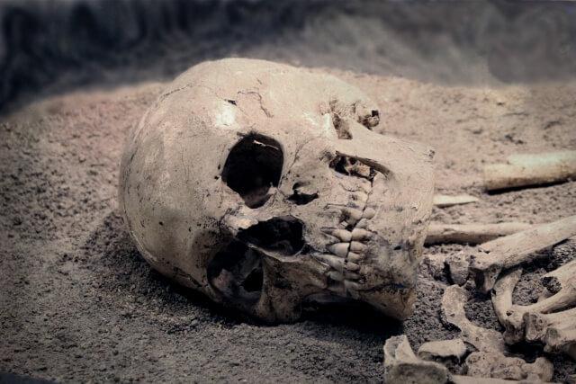 骸骨のイメージ