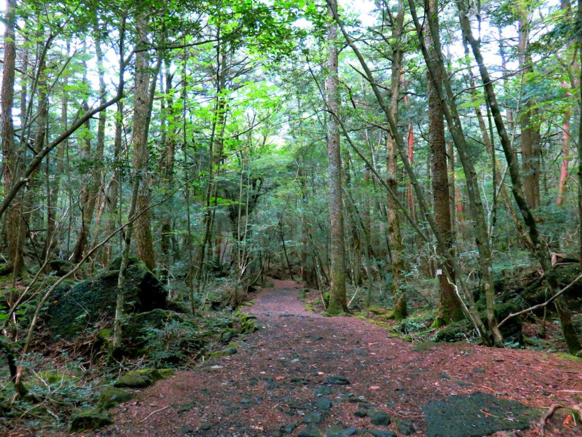 富士の樹海の遊歩道
