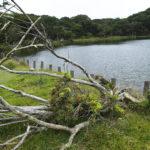 心霊スポット【静岡】八丁池は天城山心中したカップルの怪現場?