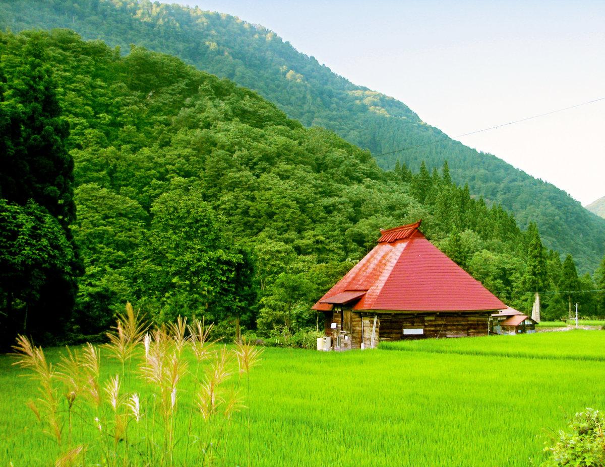 田んぼと赤い屋根の家